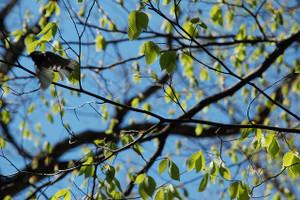 Blog_kumotori2012_192