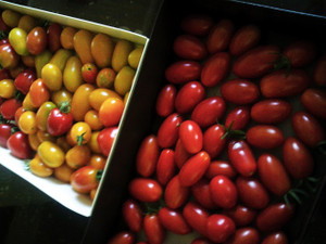 Blog_tomatoes_0420