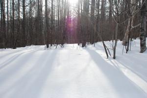 B_snowshoe_080