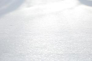 B_snowshoe_082